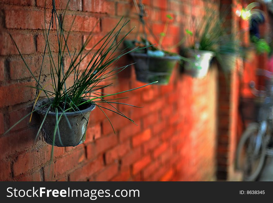 Pot on the red brick wall