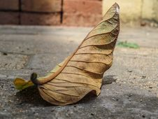 Free Fallen Leaf Details Stock Photos - 86300923
