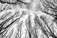 Free Through The Trees Royalty Free Stock Image - 86301096