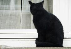 Free Black Cat Royalty Free Stock Photo - 86302035