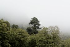 Free Misty Forest Stock Images - 86302234