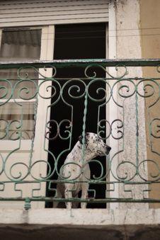 Free Dog On The Window Stock Image - 86303911