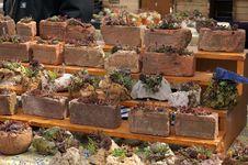 Free Flower Market Stock Image - 86304231