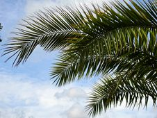 Free Green Palm Tree Under Blue Cloudy Sky During Daytime Stock Image - 86311021