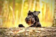 Free Outdoor Portrait Of Terrier Dog Royalty Free Stock Images - 86313029