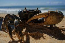 Free Crab On Beach Stock Photo - 86313400
