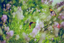 Free Butterflies In Flowers Royalty Free Stock Image - 86313466