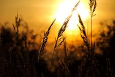 Free Close-up Of Wheat Field Against Sky At Sunset Stock Photo - 86352630