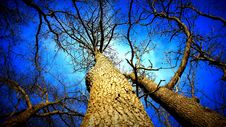 Free Low Angle View Of Barren Trees Stock Photo - 86353030