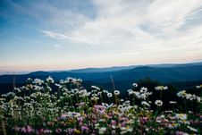 Free Wild Meadow Stock Photography - 86353122