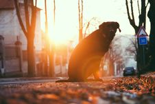 Free Dog By The Tree At Sunset Stock Photo - 86353580