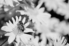 Free Close-up Of Bee On Flower Stock Photos - 86354023