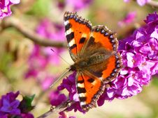 Free Orange White And Brown Butterfly On Pink Petal Flower Stock Photo - 86354210