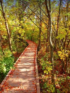 Free Wooden Path Stock Image - 8640691