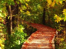 Free Wooden Path Royalty Free Stock Photo - 8640845