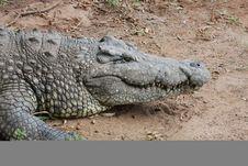 Free Crocodile Stock Photo - 8641440
