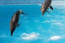 Free Two Dolphins Royalty Free Stock Photography - 8642857