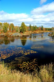 Pond With Water Lillies In The Fall Royalty Free Stock Photos