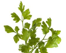 Free Organic Parsley Italian Stock Images - 8644754
