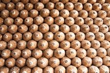 Free Mushroom Planting Stock Photography - 8644922