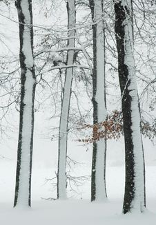 Free Winter Trees Stock Photo - 8647250