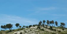 Free Windswept Trees On A Hill Stock Photography - 8647562