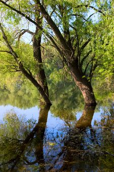Free Tree On The River Stock Image - 8647811