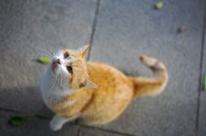 Free Red Cat. Royalty Free Stock Photography - 8648707