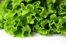 Free Fresh Lettuce Royalty Free Stock Photo - 8649045