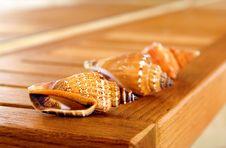 Free Sea Shells Stock Photo - 8649360