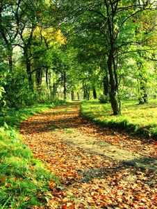 Free Green Alley In Autumn Stock Photography - 8649712