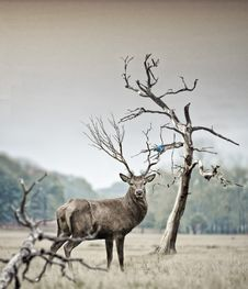 Free Deer On Field Royalty Free Stock Photo - 86471065