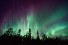 Free Northern Lights Over Pine Trees Royalty Free Stock Photos - 86472298