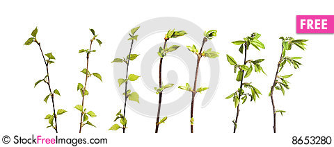 Free Plant Isolated Stock Photo - 8653280