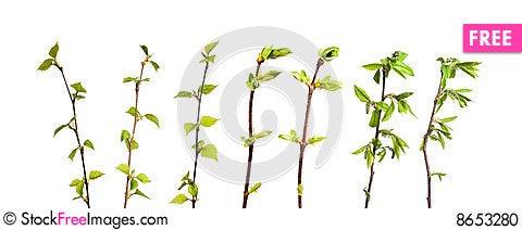 Free Plant Isolated Stock Photo - 8653280