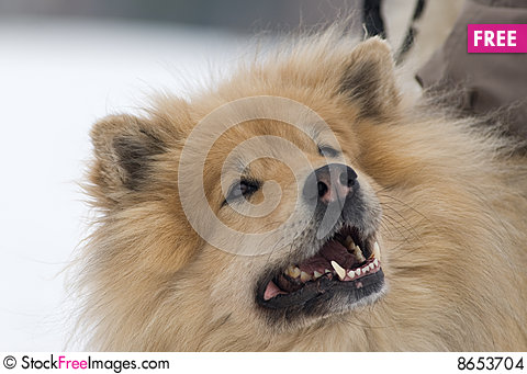 Free Cheeky Dog Stock Images - 8653704