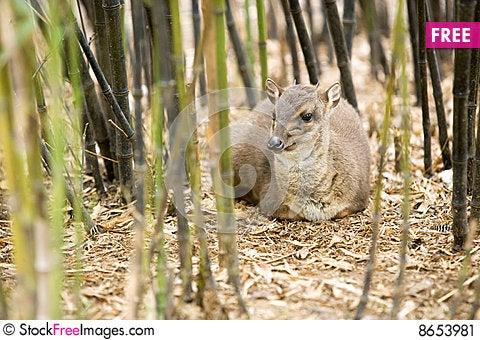 Free African Antilope Stock Image - 8653981
