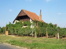Free House Near Vineyard Royalty Free Stock Photo - 8652815