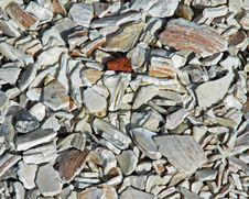 Free Crushed Shells Stock Image - 8653961