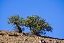 Free Morocco Stock Photo - 8655120