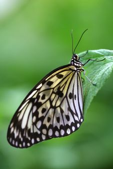 Free Butterfly Resting On A Leaf Stock Images - 8656984