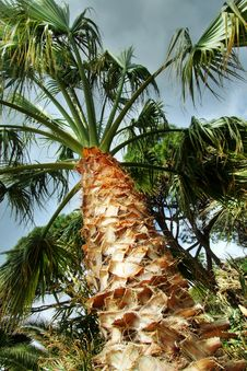 Free A Palm Royalty Free Stock Images - 8658859