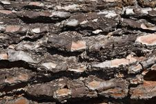 Free Pine Texture Stock Photo - 8659210