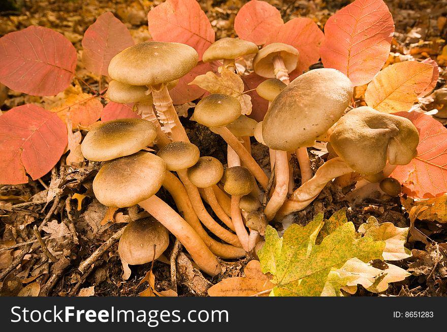 Autumn bouquet of mushrooms.
