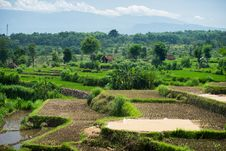 Free Wide Green Rice Terraces At Bali Royalty Free Stock Photos - 86542748