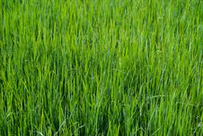 Free Close Up On Fresh Green Grass Texture Stock Photo - 86542920