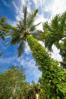 Free Palm Tree And Bright Sun On Blue Sky Royalty Free Stock Photo - 86550055