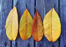 Free Autumn Leaves On Wood Royalty Free Stock Photography - 86575547
