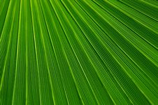 Free Green Leaf Texture Stock Images - 86577444