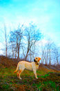 Free Labrador By The Lake Royalty Free Stock Photography - 8661567